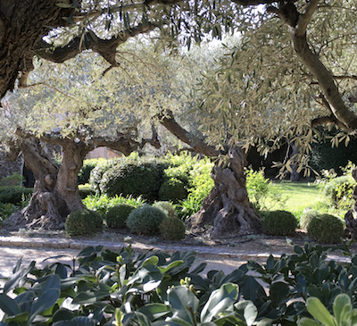 decoration jardin saint tropez